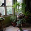 Nine Houseplants That Clean The Air and Are Basically Impossible To Kill
