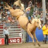 Worlds Tiniest and Most Adorable Rodeo Captured On Camera