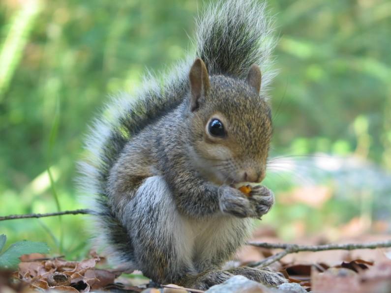 Squirrel Photo Shoot!