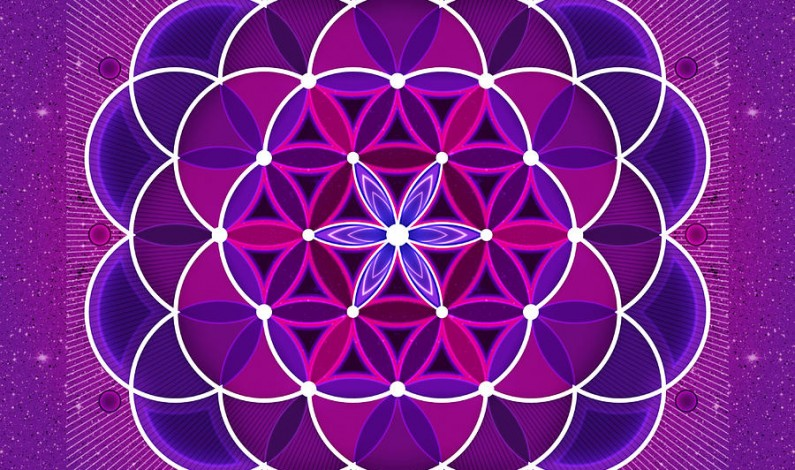 Dolphins Demonstrate The Flower of Life In Action