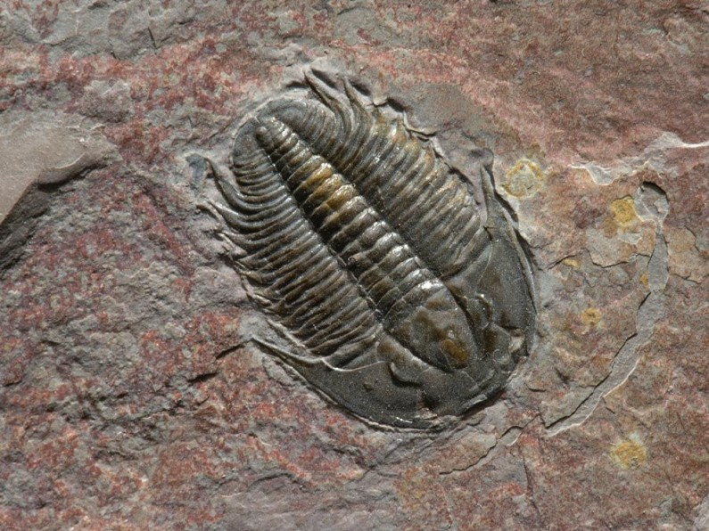 15 Unbelievable Fossil Discoveries