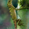 Indonesian Photographer Captures Dragon Lizard Playing Leaf Guitar