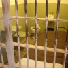 Six Countries Who Rake In The Prison Profits