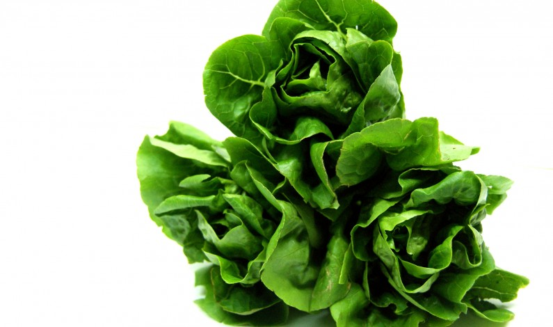 Organic Is Better, Studies Show