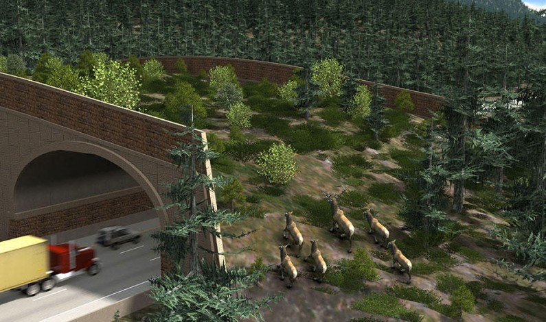 Washington State To Construct First Wildlife Bridge Over Busy Highway