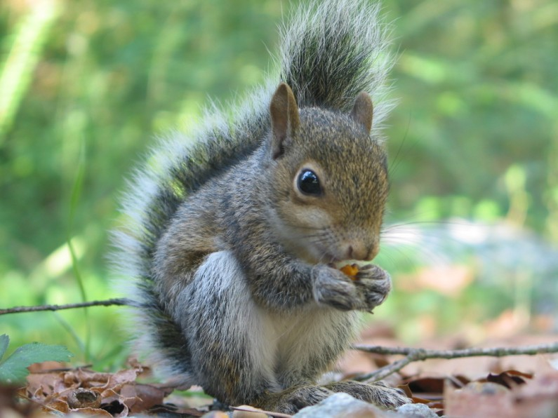 Squirrel Photo Shoot!