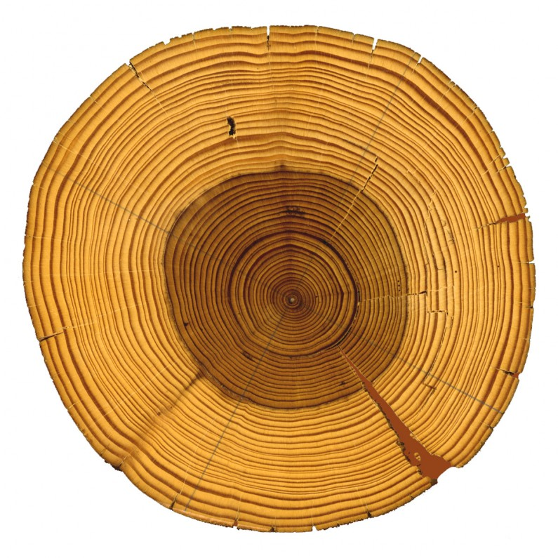 What A Tree Sounds Like When It's Played on a Record Player