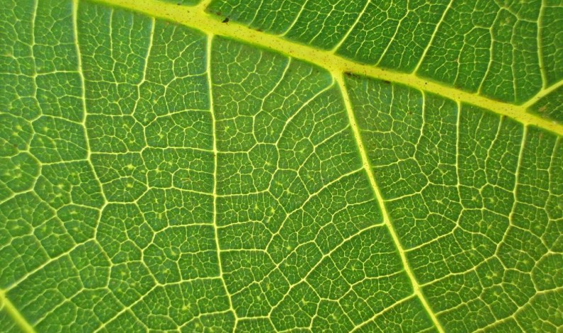 """Self-Healing """"Artificial Leaf"""" Produces Energy From Dirty Water"""