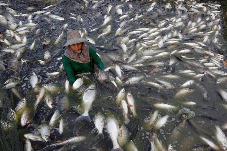 80% of U.S. Tilapia Comes From China… Loaded With Growth Hormones