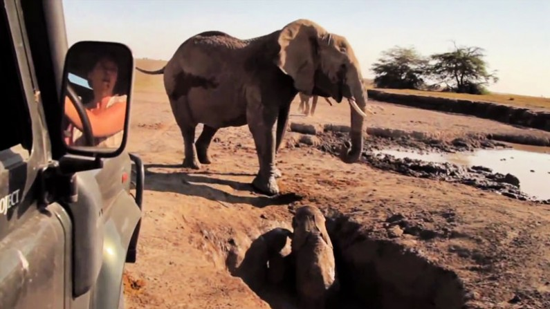 Mom and Baby Elephant Reunion Is Marvelously Heart-Warming