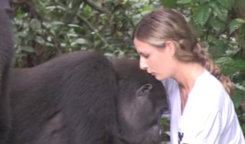 A Reunion Between This Woman and Her Gorilla Friend!